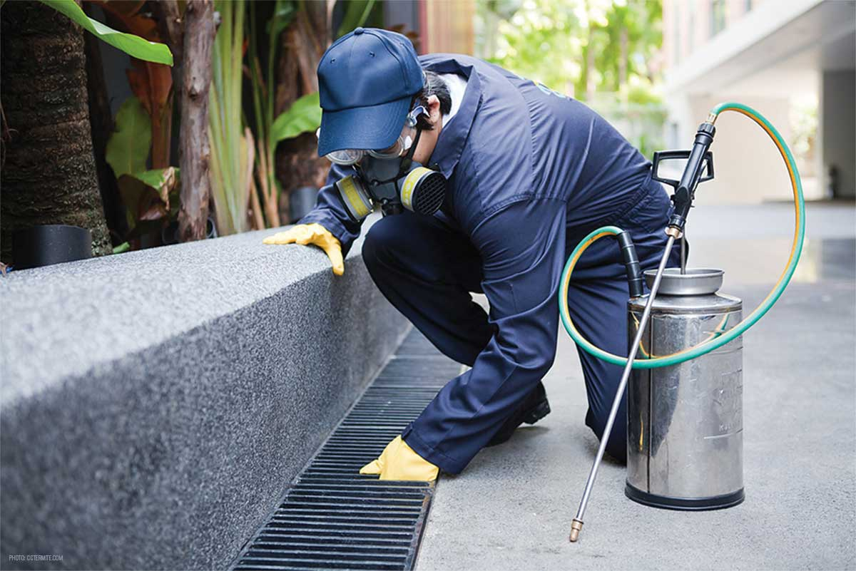 Pointers to Consider For Selecting Exterminator White Plains NY