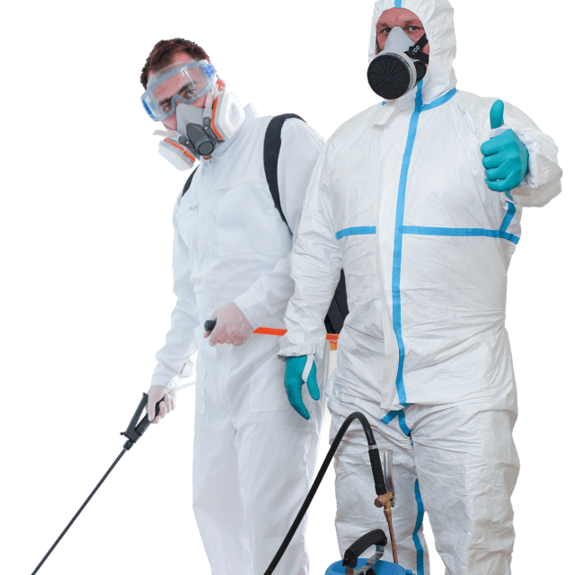 What Is The Best Treatment For Bed Bugs?