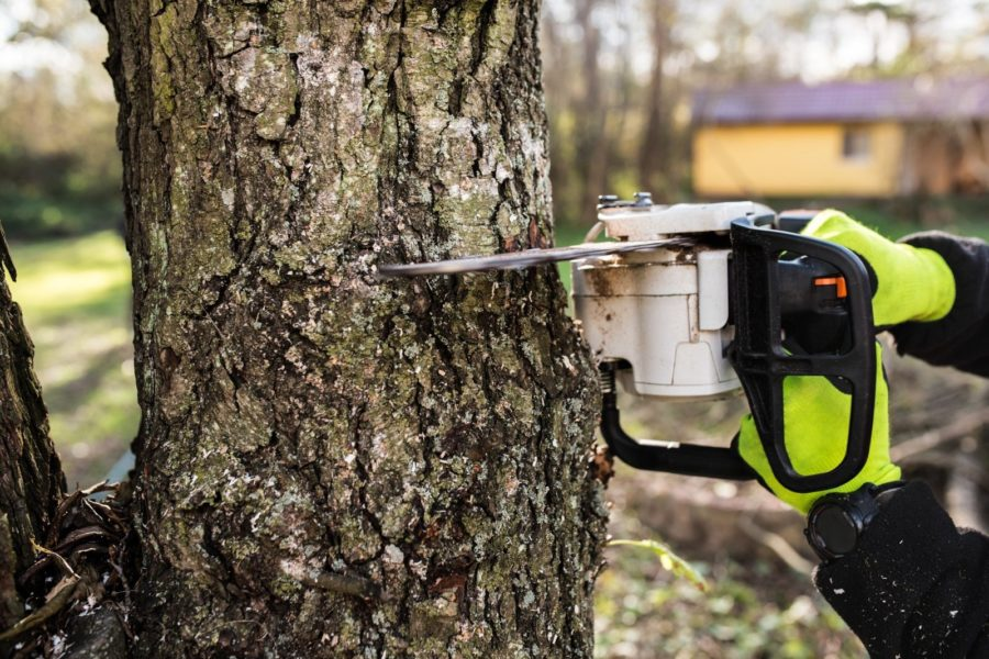 Qualities to Look for in a Tree Service Provider