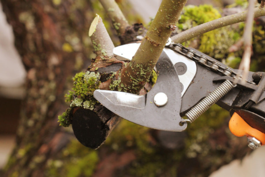 What are the benefits of getting your trees pruned and trimmed regularly?