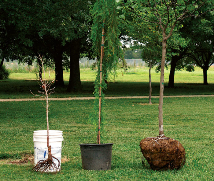 How to take good care of the roots of a tree in your Home Garden?