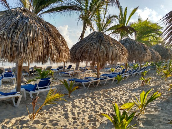 What type of knowledge you should have about Palapa Umbrellas?